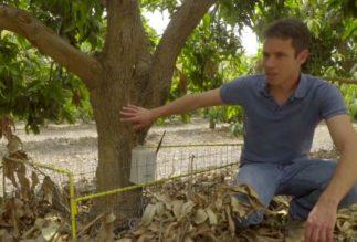 6 Environmental Films to Watch on Tu b'Shvat