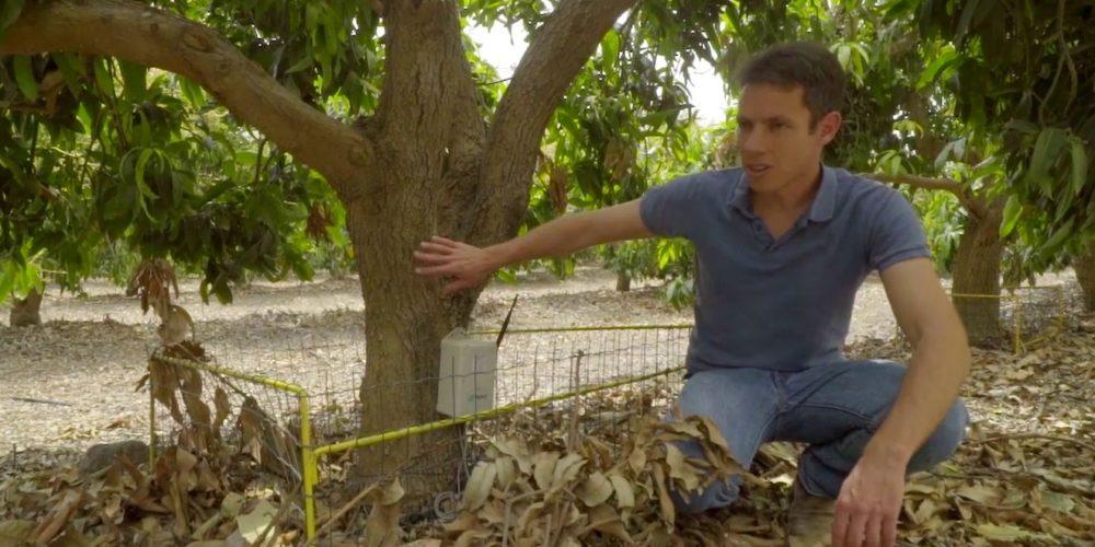sustainabletree